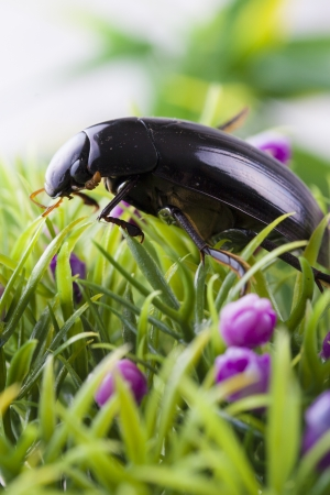 Close up photo of the small black insect - the beetle on the green grass. Stock Photo - 22093277