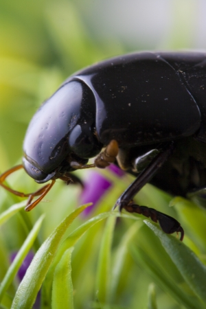 Close up photo of the small black insect - the beetle on the green grass. Stock Photo - 22093282