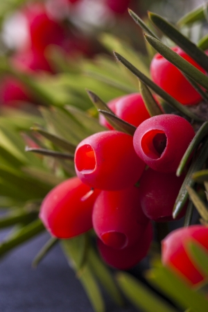 Close up photo of an Autumn  tree branch with red berries on it on the black satin background.