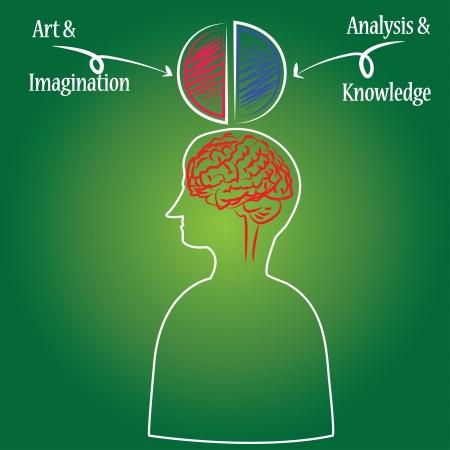 Brain,Vector Stock Vector - 14958563