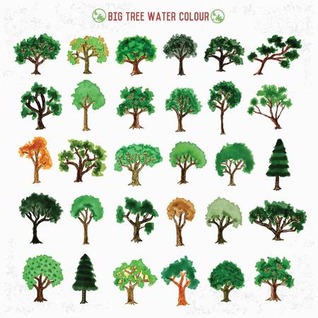 birch bark: Big tree design water color concept Illustration