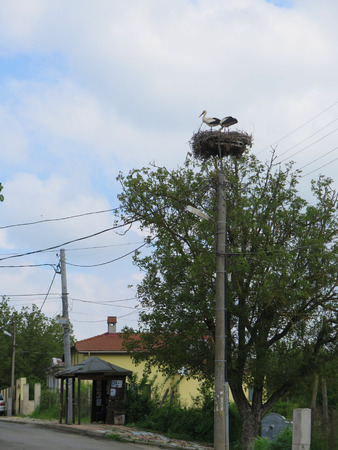 flew: Two of the stork flew to its nest. Blue skies , tall pole near the road