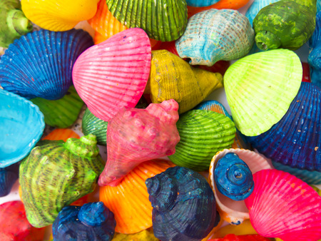 memorable: memorable background from the bright colored shells closeup, top view