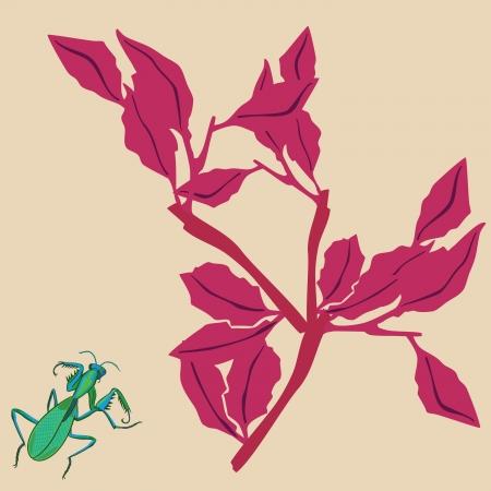 mantis: Mantis and plant Illustration
