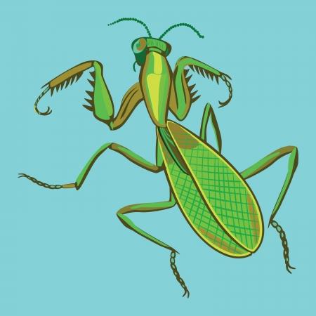 mantis: mantis Illustration