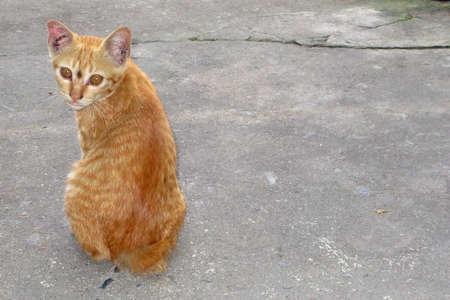 moggy: little kitten.