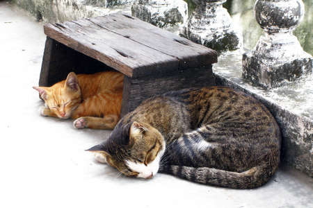 moggy: Cat sleep together Stock Photo