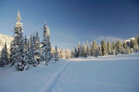 bosque con nieve: bosque de invierno. pistas de esqu� de nieve. pinos. nieve Foto de archivo
