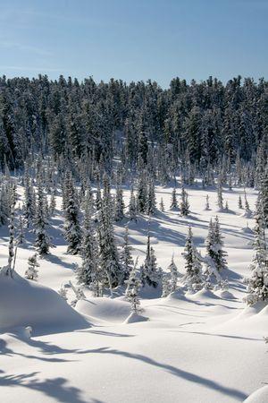 winter landscape trees under snow after snow-storm photo