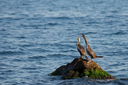 Two ducks are sitting on a rock in the sea Stok Fotoğraf