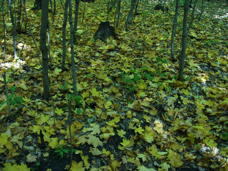 samara: Autumn woods, near Samara city Stock Photo