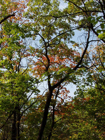 samara: Autumn woods, nearest Samara city Stock Photo