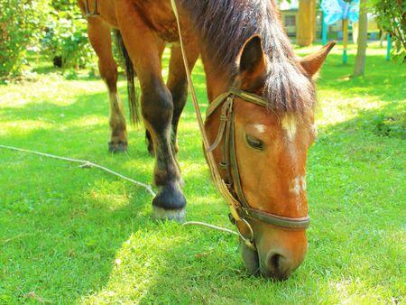 horse eats grass in the park Banco de Imagens