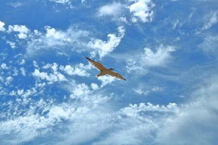 flying seagulls on a cloudy sky background texture background Stock Photo