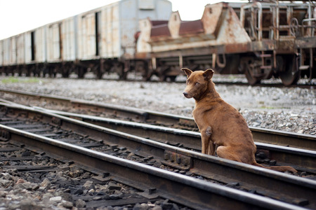 backstairs: Thailand Dog sitting on the rails