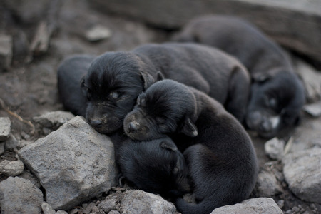 backstairs: Thailand embraced the black puppy sleeping four  Stock Photo