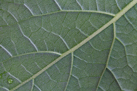 close-up green leaf background texture