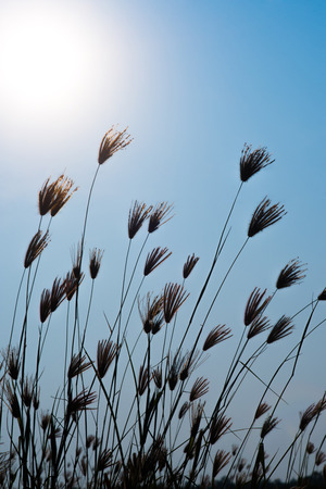 feeble: grass on sunny day