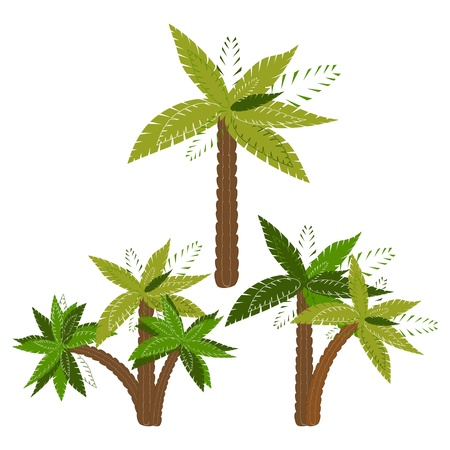 Palm trees isolated on white background  illustration