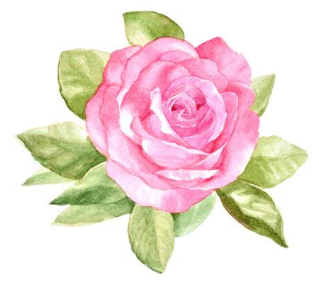 main originale d'aquarelle peinte belle rose sur fond blanc Banque d'images