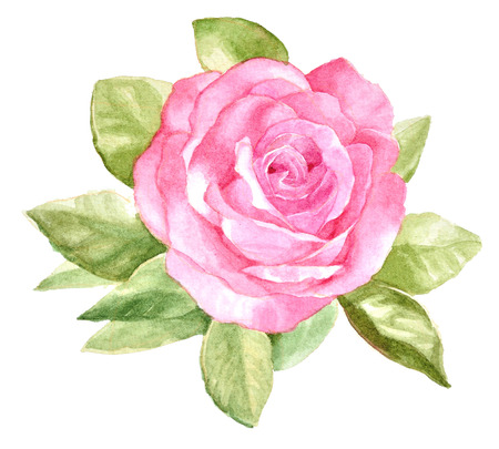 single leaf: original watercolor hand painted beautiful pink rose on white background