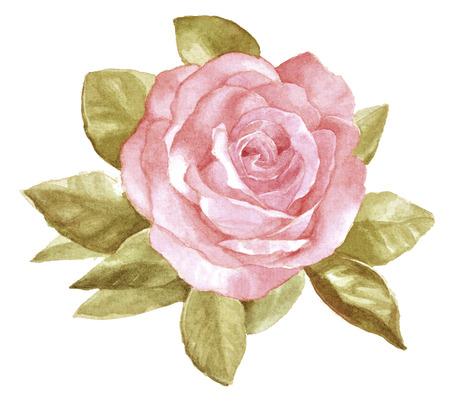 Original watercolor hand painted beautiful pink rose on white original watercolor hand painted beautiful pink rose on white background stock photo 36232805 mightylinksfo