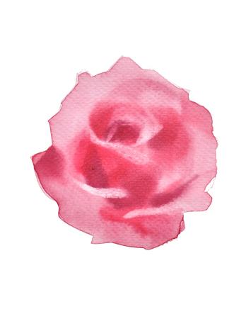 Rosa, acquerello, rosa, valentine, auguri, Scheda. Pittura festiva di amore cartolina.watercolor, mano acquerello dipinta su sfondo bianco Archivio Fotografico - 75076983