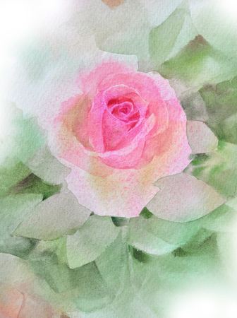 Rosa rosa acquerello dipinto a mano Archivio Fotografico - 75076987