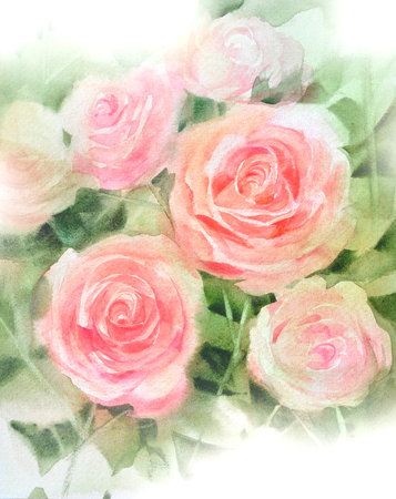 pink rose  watercolor hand-painted, isolated on white Zdjęcie Seryjne