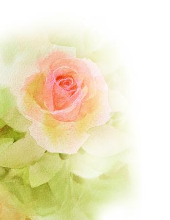 Arancione rosa acquerello dipinto a mano Archivio Fotografico - 75248321