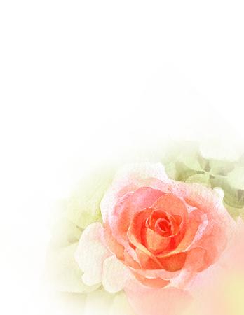 orange rose  watercolor hand-painted
