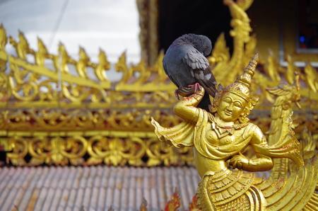 Bird on the statue photo