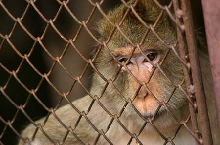 enclosure: monkey in the enclosure
