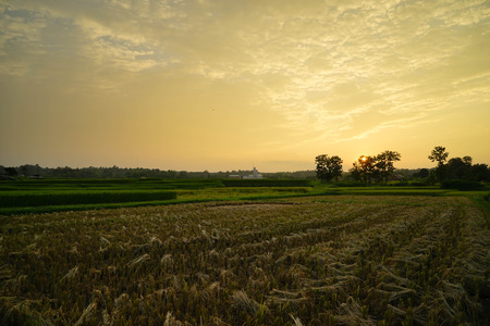 gloden: Sunset over the field after harvest with gloden sky