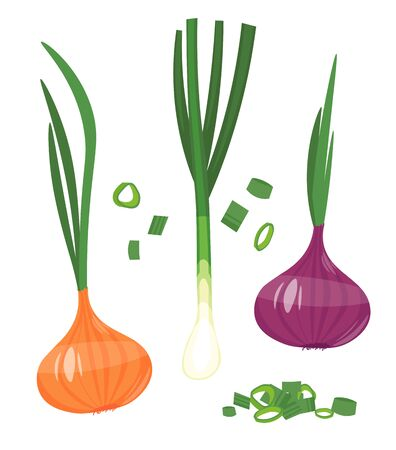 Red Onion Vector. cartoon illustration Isolated on white