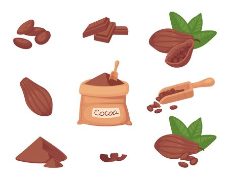 Super food cocoa beans. Pod, beans, cocoa butter, cocoa liquor and powder. Vector set.