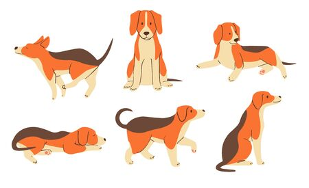 The various operations of cute beagle 矢量图像