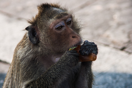 friut: The monkey eating a jelly friut