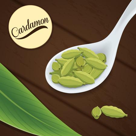 cardamon: Cardamon on white spoon Illustration