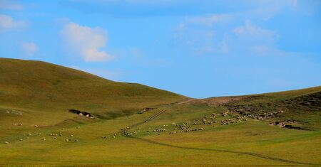 The vast grasslands of Inner Mongolia and grazing cattle and sheep