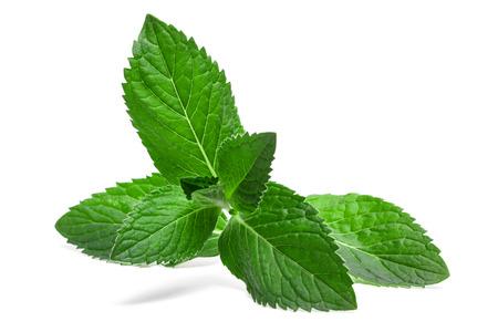 흰색 배경에 고립 된 신선한 민트 잎 스톡 콘텐츠