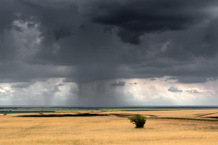 heavy rain: Heavy rain at daytime column