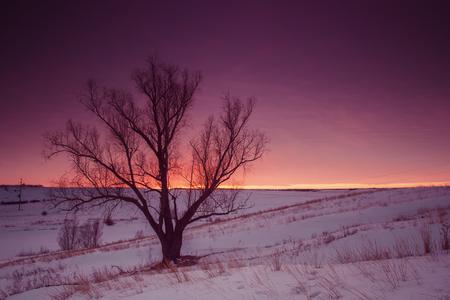 Winter nature landscape. Silhouette of tree at sunset Standard-Bild
