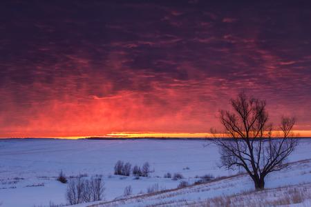 Winter natuur landschap. Silhouet van de boom bij zonsondergang Stockfoto