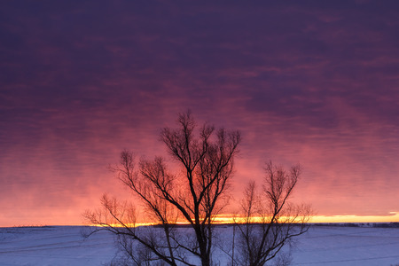 Winter nature landscape. Silhouette of tree at sunset Stock Photo