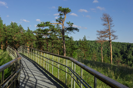 handrails: steel pathway with handrails on the forest mountain