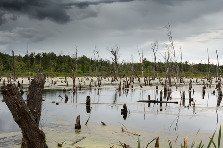 sticking to: dead trees sticking out of the swamp