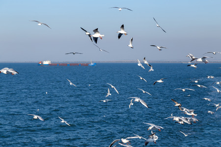 Few seagulls flying over the blue sea