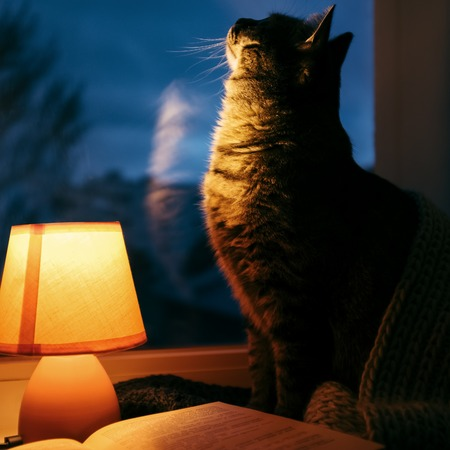 Cute cat under wool scarf, small table lamp and old vintage book on window sill. Cozy home in the dusk Stock Photo
