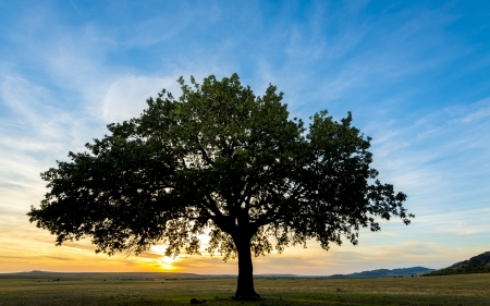 sunset and siluet of tree on field photo